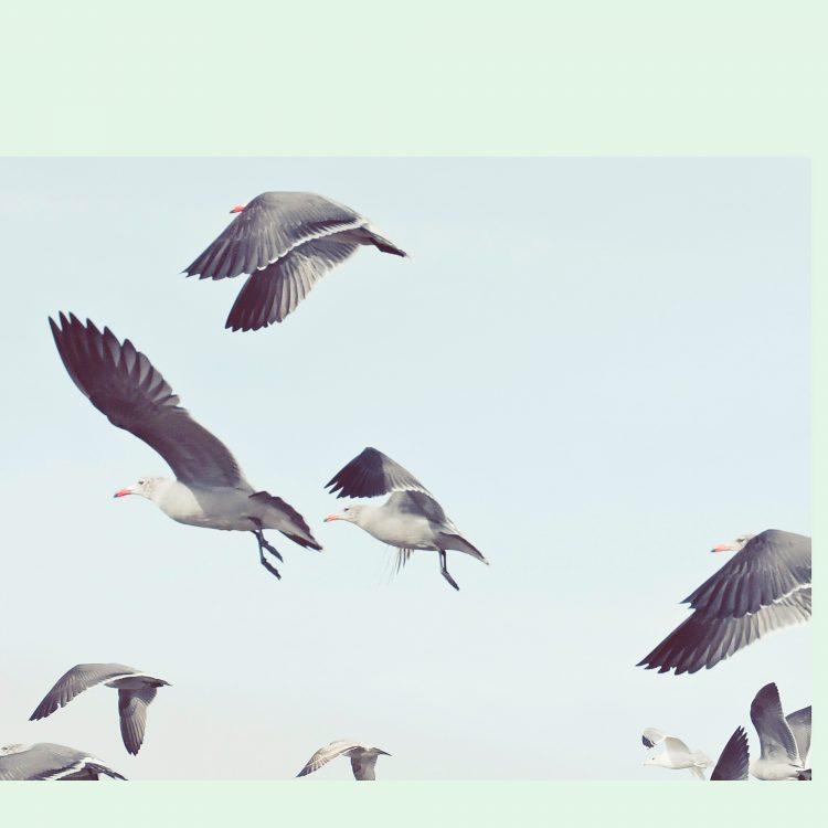 Kai-Uwe Gundlach - the seagulls