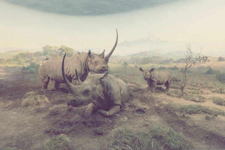Kai-Uwe Gundlach - desperate animals